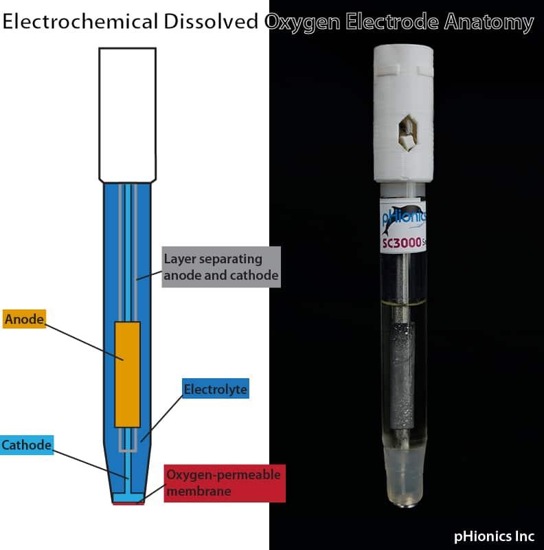electrochemical dissolved oyxgen electrode anatomy